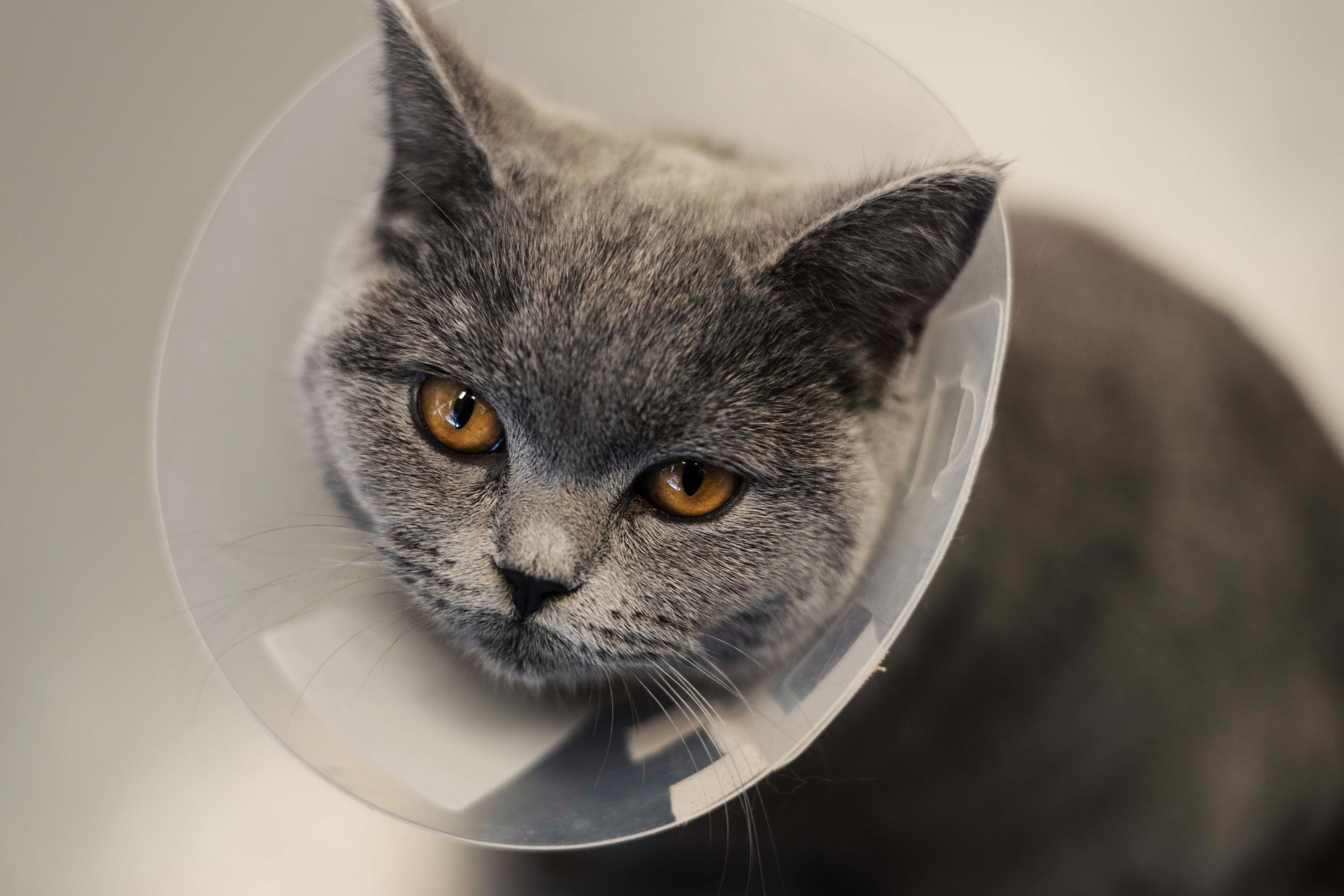 Pijn management bij huisdieren
