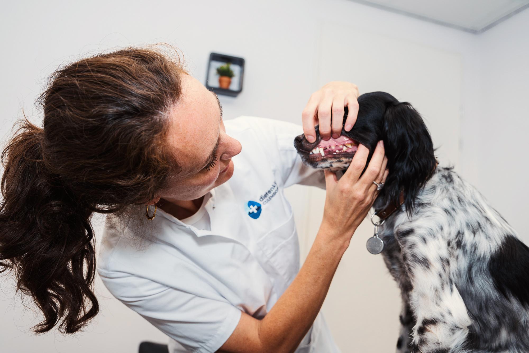 Gebit controleren honden
