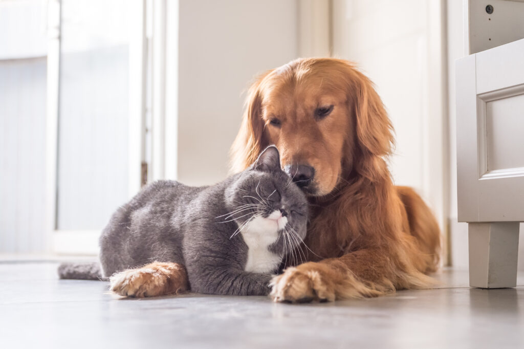 Blog ouderdomskwaaltjes hond en kat